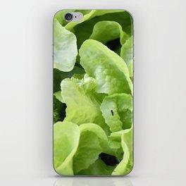 Lettuce 1 iPhone Skin