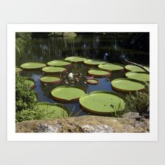 Giant Lily Pads Art Print