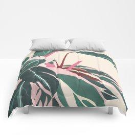 Stromanthe Sanquinea Comforters