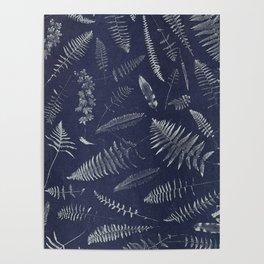 Botanical Fern Poster
