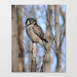 Spring in style Canvas Print