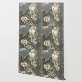 Vintage Illustration of Snowy Owls (1840) Wallpaper