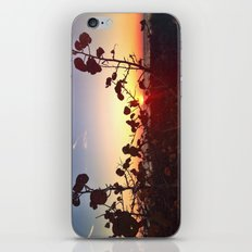 Looking beyond the Obvious iPhone & iPod Skin