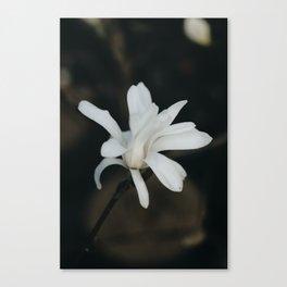 White Flower. Canvas Print