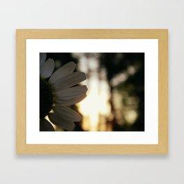 daisy. Framed Art Print