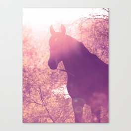 horse collection. Trakehner. sunset Canvas Print