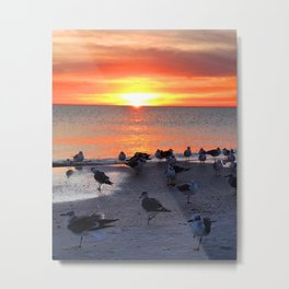 Shore Birds Metal Print