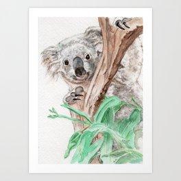 Koala Peek-A-Boo Art Print