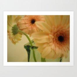 baby-pink daisy-petals ~ flowers Art Print
