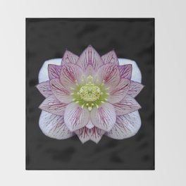Hellebore Flower Symmetry Throw Blanket