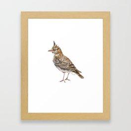 Galerida cristata, Crested lark traditional artwork Framed Art Print