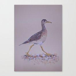 Upland Sandpiper Canvas Print