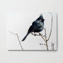 Desert Black Bird Metal Print