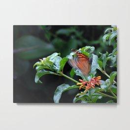 Butterfly in motion Metal Print