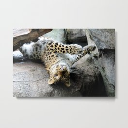 Leopard Boudoir Metal Print