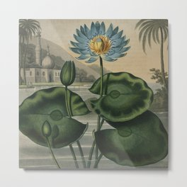 Temple of Flora Blue Egyptian Water Lily Metal Print