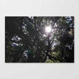 Forest Sunshine Canvas Print