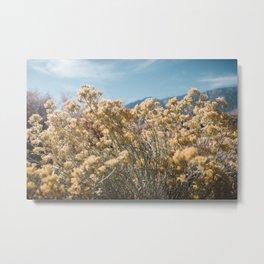 California Yellow Flowers Metal Print