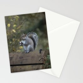 Squirrel Snack II Stationery Cards