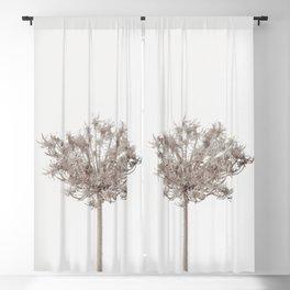 Dried Flowers Dried Allium Neutral Minimalist Blackout Curtain