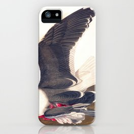 Black Backed Gul John James Audubon Scientific Vintage Illustrations Of American Birds iPhone Case