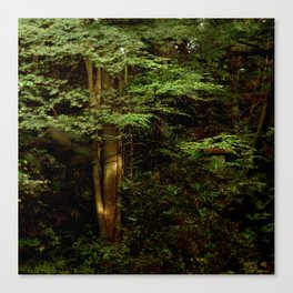Tree and Green Canvas Print