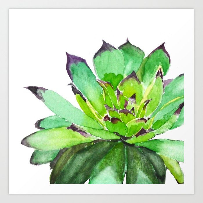 green succulent 2 Art Print