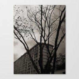 Winter In The Tropics Canvas Print
