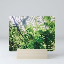 Sunlit Fern Leaves Mini Art Print