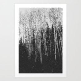 Winter Aspens x Black and White Landscape Photography Art Print