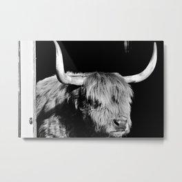 Heilan Coo Metal Print