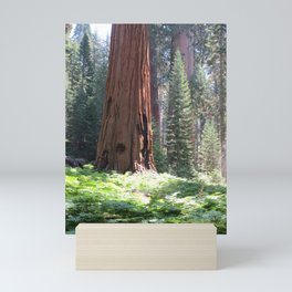 Crescent Meadow Sequoia Mini Art Print
