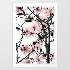 Magnolia Canopy Art Print