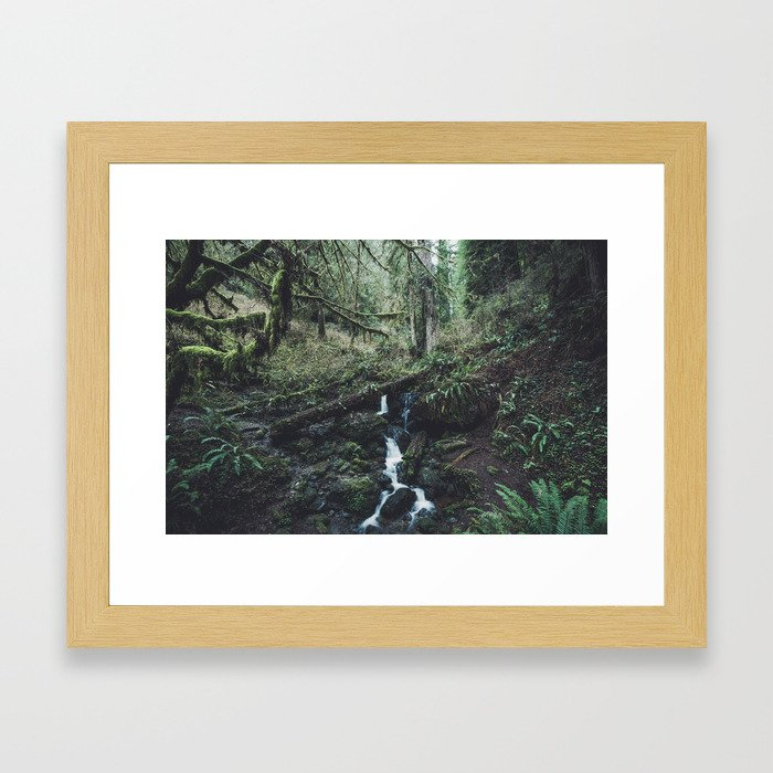 California Redwood Rainforest - Nature Photography Framed Art Print