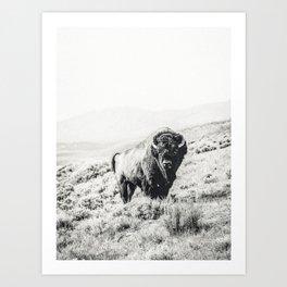 Nomad Buffalo Art Print
