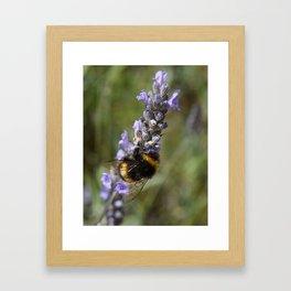 Bee & Lavender Framed Art Print