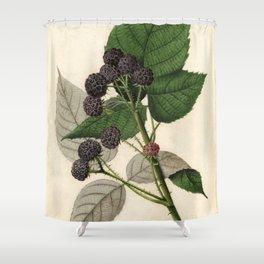 Vintage Painting of Blackberries Shower Curtain