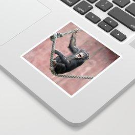 Chimpanzee_001_by_JAMFoto Sticker