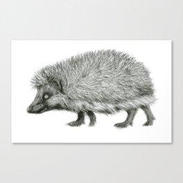 Funny Hedgehog SK050 Canvas Print
