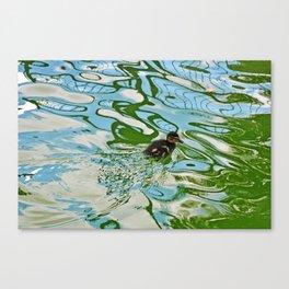 Mallard duckling swimming Canvas Print