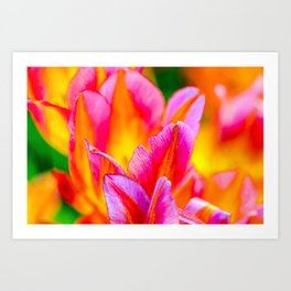 Brilliant Tulip Flowers Art Print