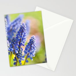 Blue Muscari Mill flowers close-up in the spring Stationery Cards