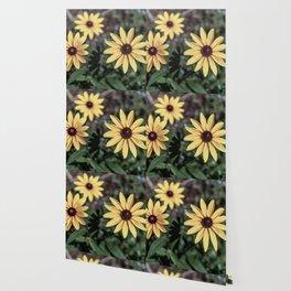 Three Gloriosa daisies Wallpaper
