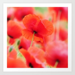 poppies square mural, in closeup Art Print