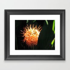 Orange Flower Framed Art Print
