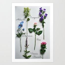 Botanical photography, summer flowers Art Print