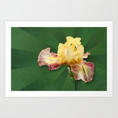 Yellow Iris Flowers on Radial Green Stripes Art Print