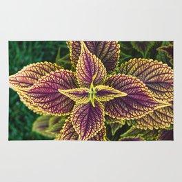Plant Patterns - Coleus Colors Rug