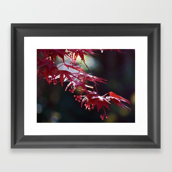 Acer Framed Art Print