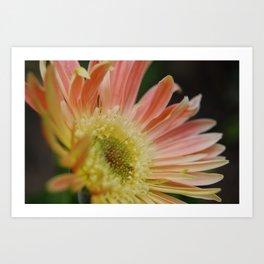 Shy Bloom Art Print